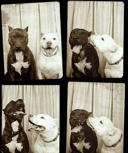 pit_photo_booth